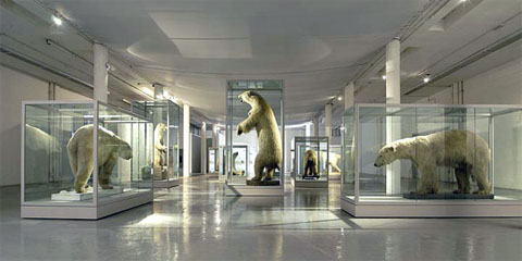 The Great White Bear exhibition